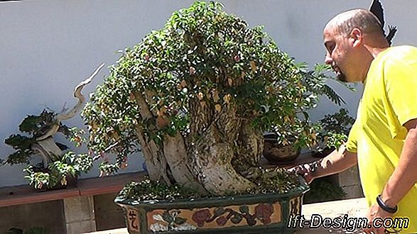 Video: Mantener un bonsai.