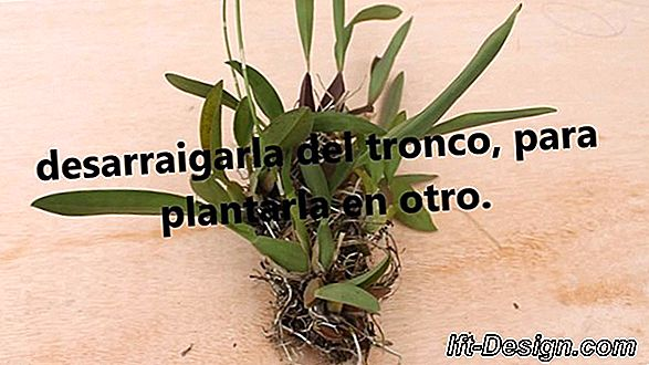 Video: replantar un cactus